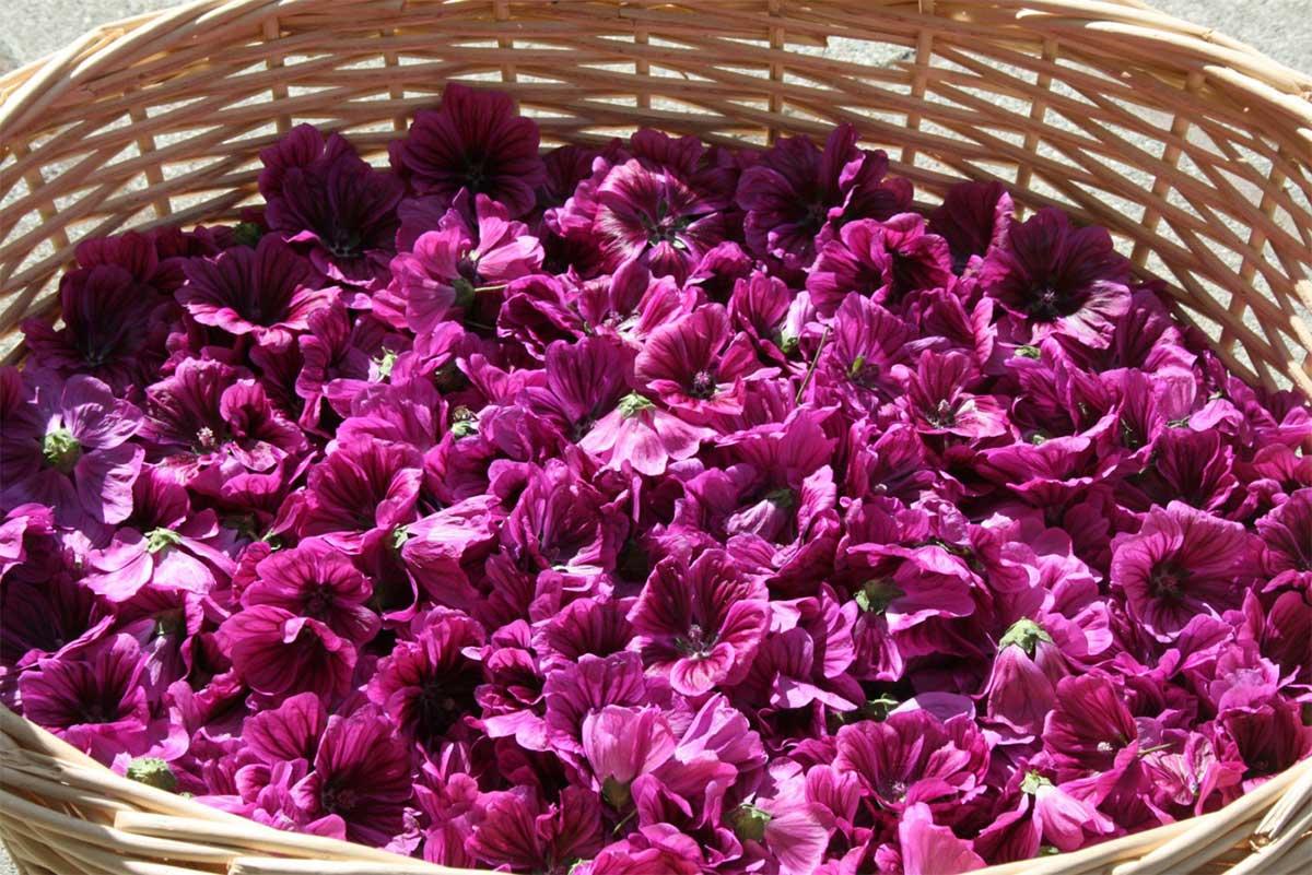 cesto di fiori di malva